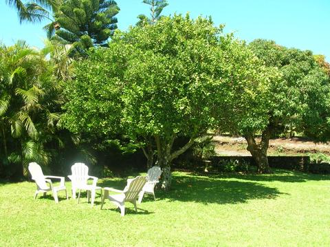Relax under our tangerine tree - pick fresh fruit in season!